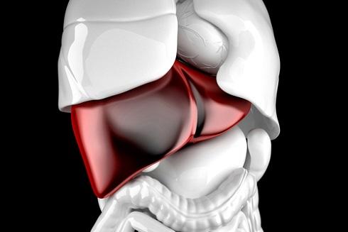 Частой причиной брюшной водянки являются различные болезни печени