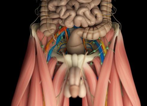 Лимфатические узлы паховой области и малого таза