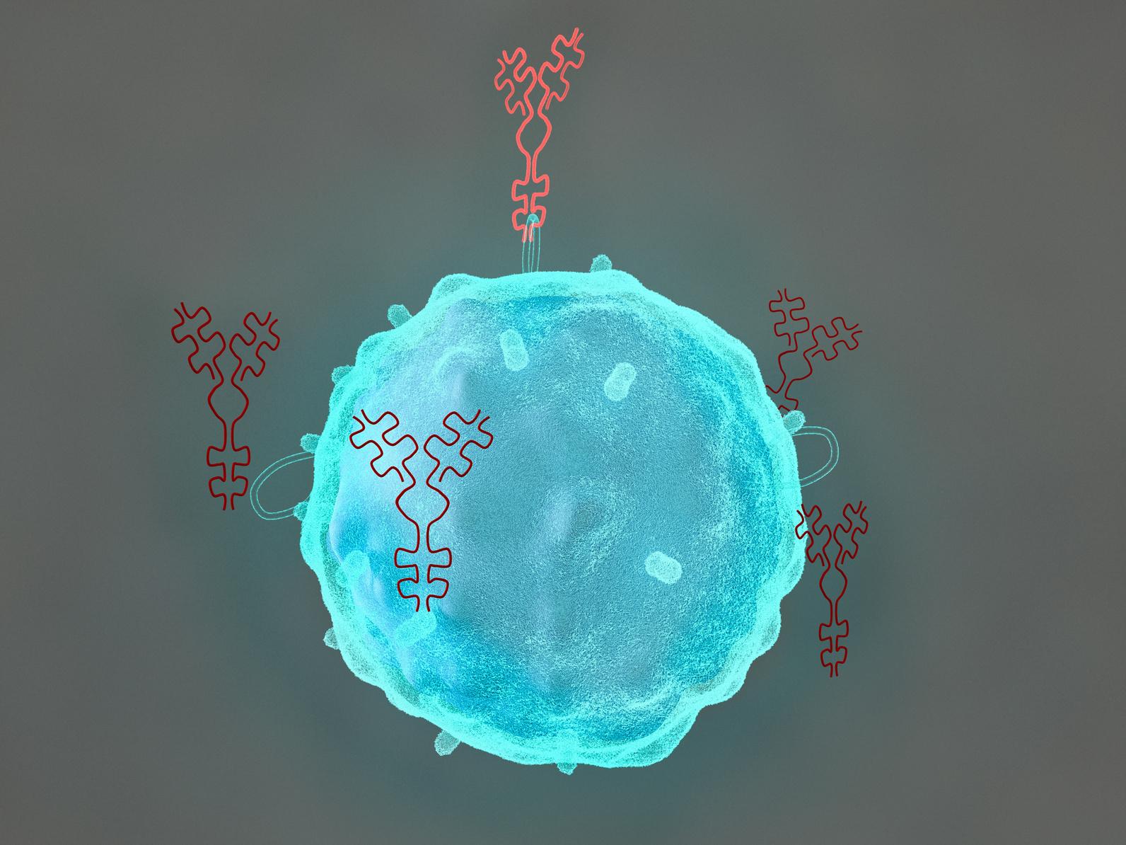 Взаимодействие b-лимфоцита и молекулы антитела