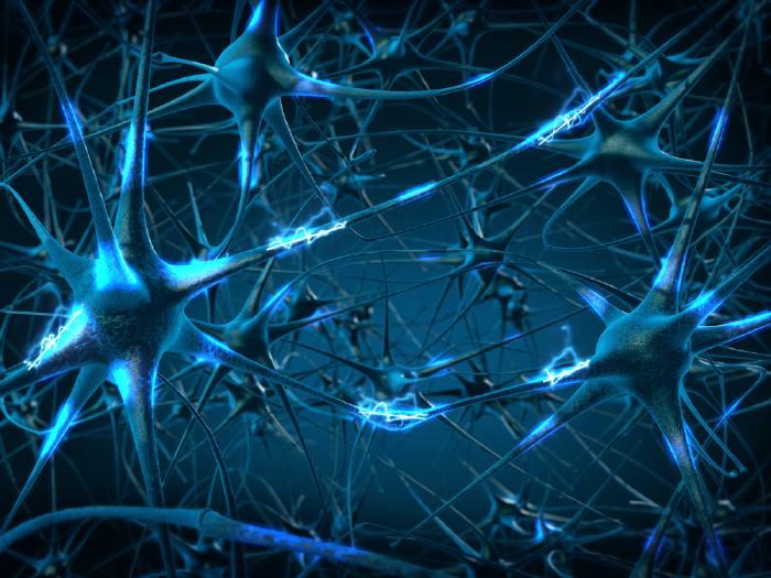 Нейрон (нервная клетка)