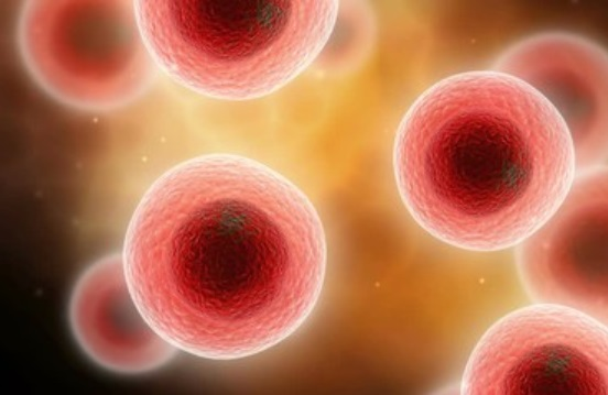 Плазмоцитарные клетки крови