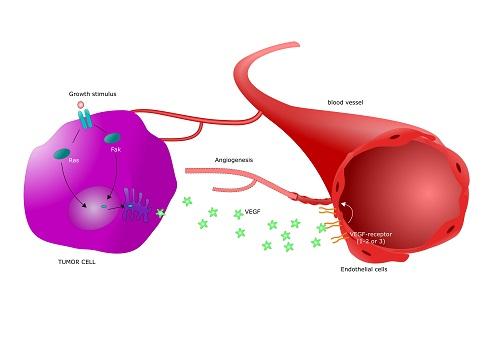 Механизм неоангиогенеза